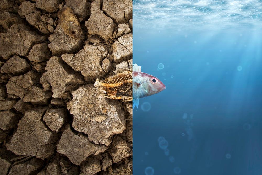 Wasser, Klima, Dürre